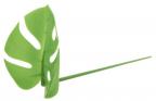 Monstera Leaf Party Picks, set 1/20