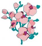 Podmetač - L, Orchidee