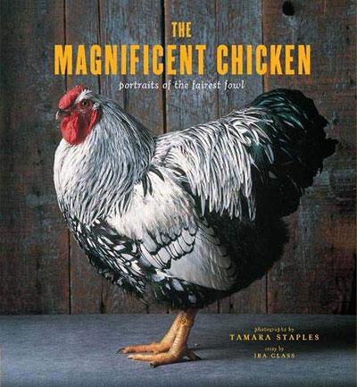 The Magnificent Chicken